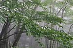 Yama002