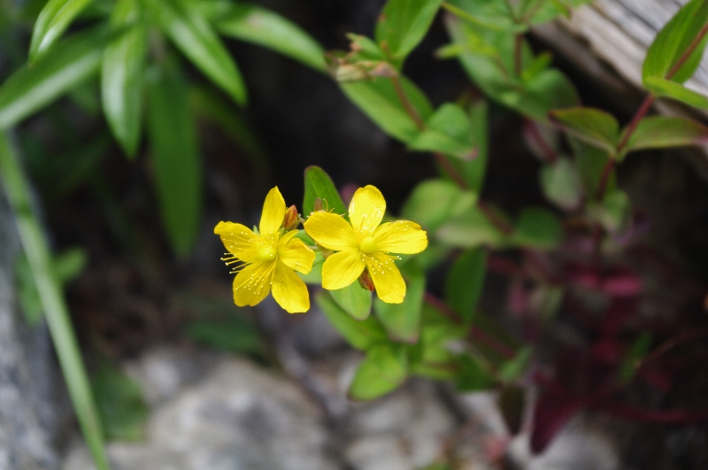 Sinanootogiri002_2